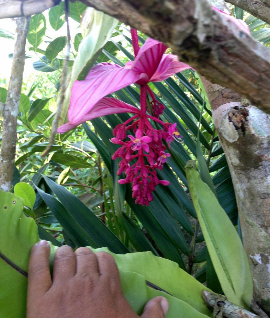 Long blooming flower