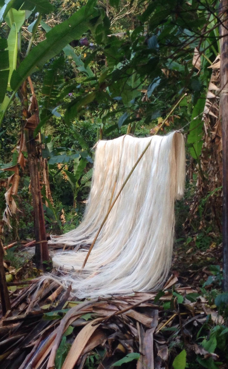 Silky fiber